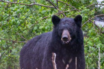 Fernweh: Alaska Teil 2