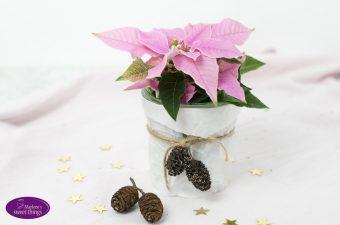 {Werbung} A Star for You – Ein Weihnachtsstern für dich.