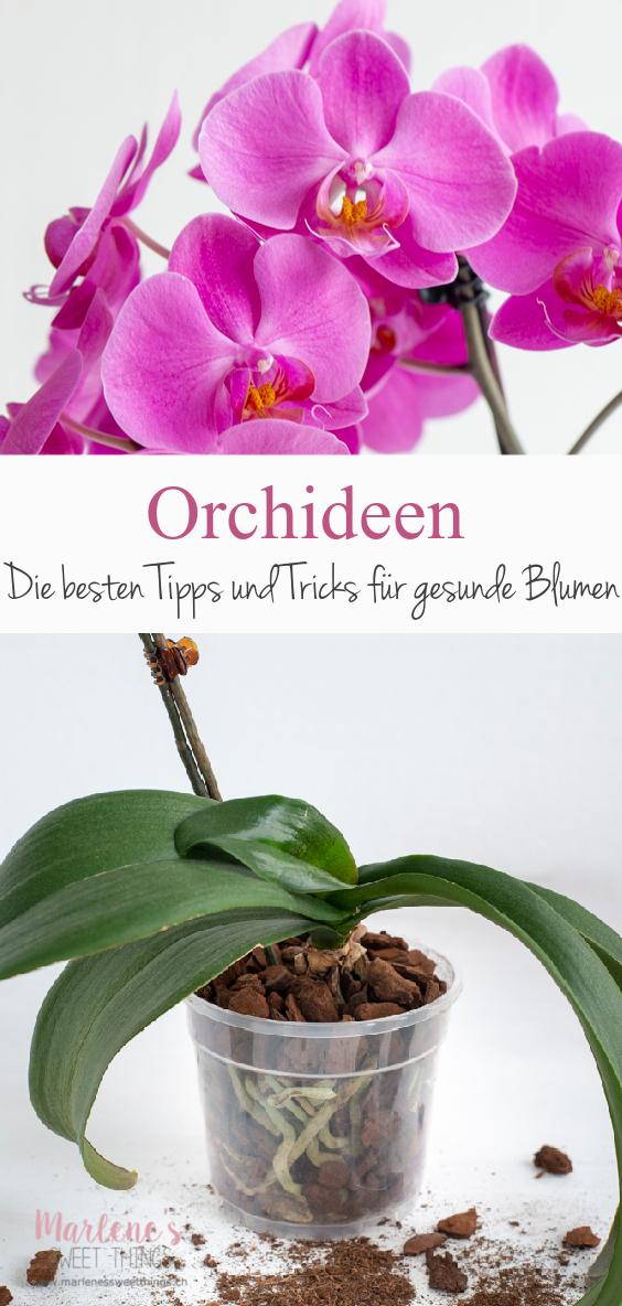 Orchideen meine Tipps zur Pflege